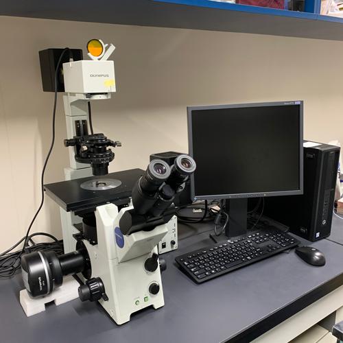 倒立蛍光顕微鏡です。<br>細胞行動のタイムラプス観察などに使っています。