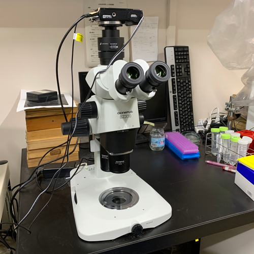 実体顕微鏡は4-5台あります。<br>使用頻度が高い顕微鏡です。