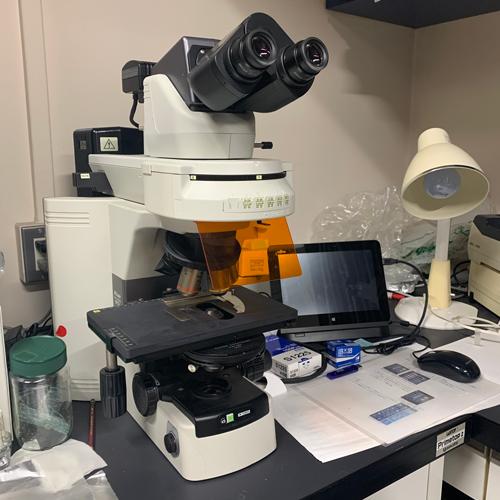 こちらは正立の蛍光顕微鏡です。<br>蛍光顕微鏡は何台あってもいいですよねー。